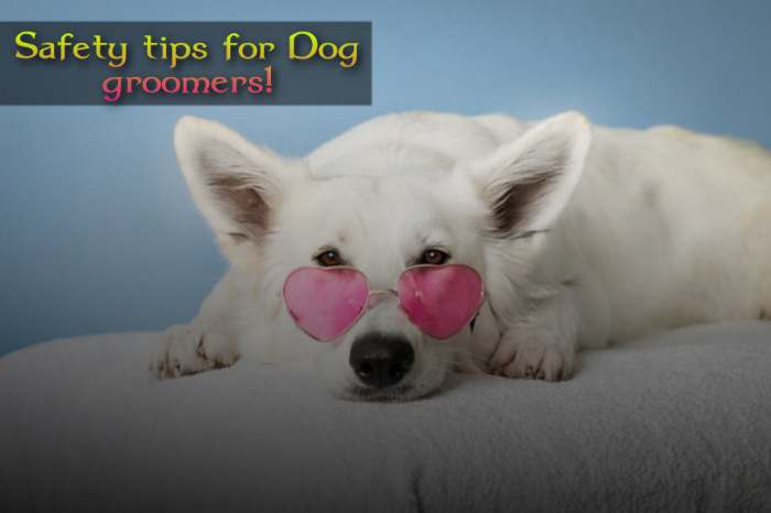Best shoes for dog groomers